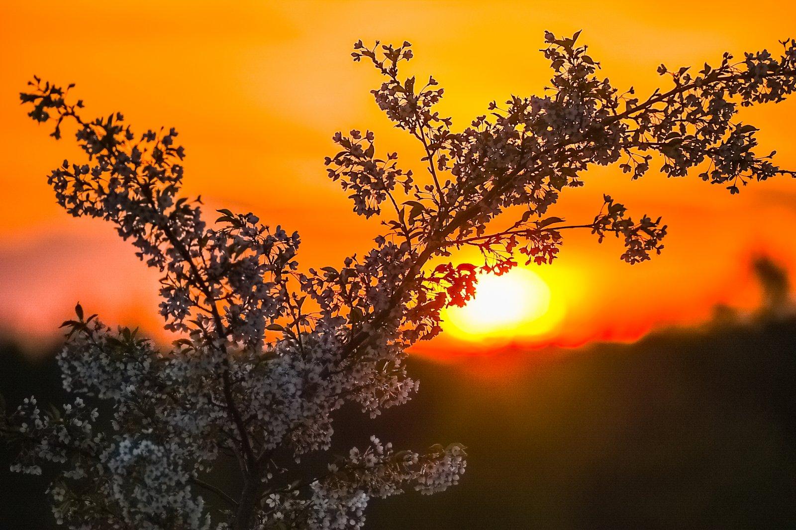 Japoniškas-sodas-pavasari-201605-5223.jpg