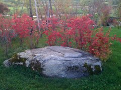 Picture-042.jpg